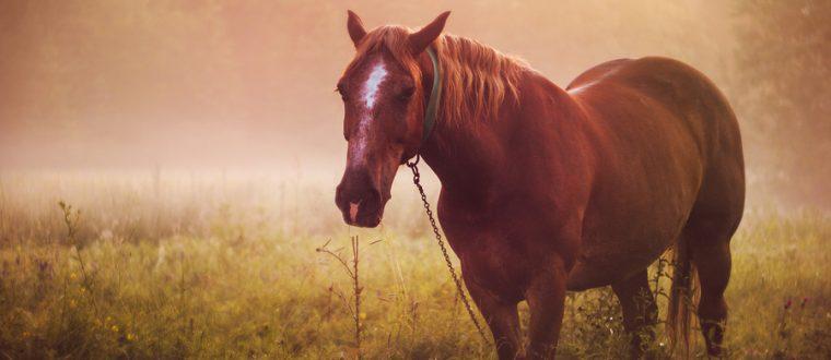 כשהסוס הטוב תועה